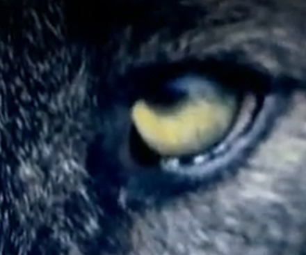Discovery en Español – Discovery Presents: Werewolves